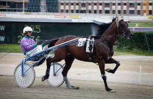 1280px-Vienna_-_Trotting_racer_at_the_Krieau_-_6602